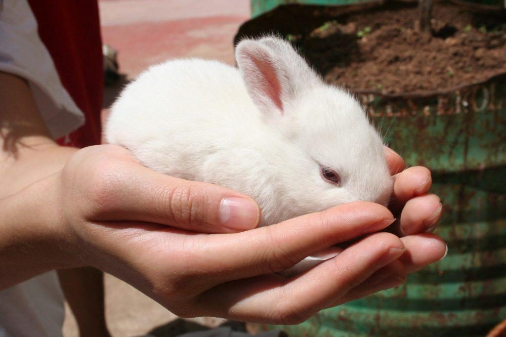 Kaninchen streicheln