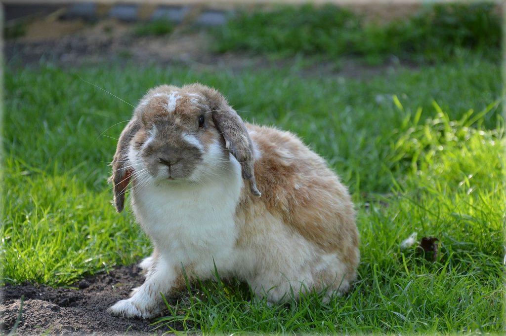 Kaninchen mit wenig Bewegung