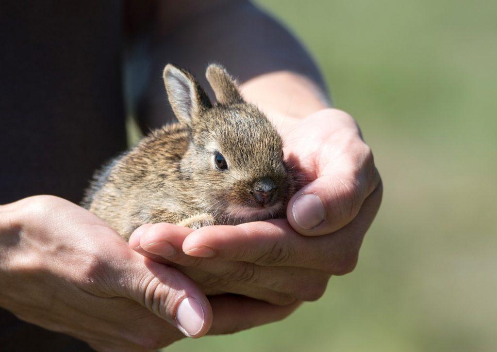 Kaninchen wird schnell zahm
