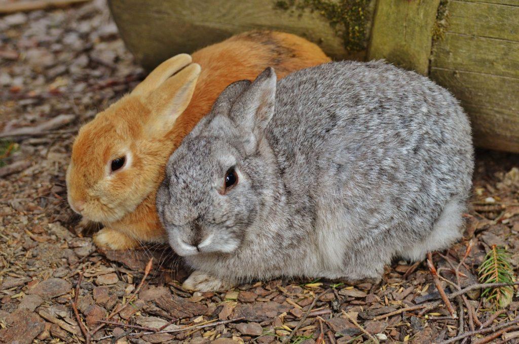 Kaninchen zusammen