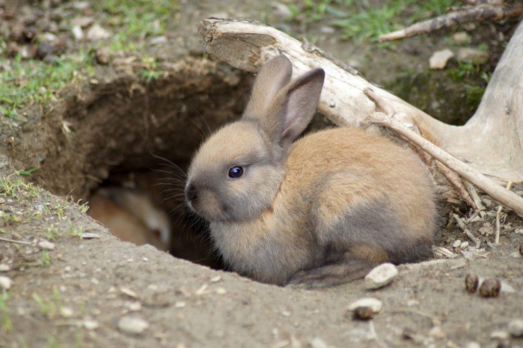 Der Kaninchenbau