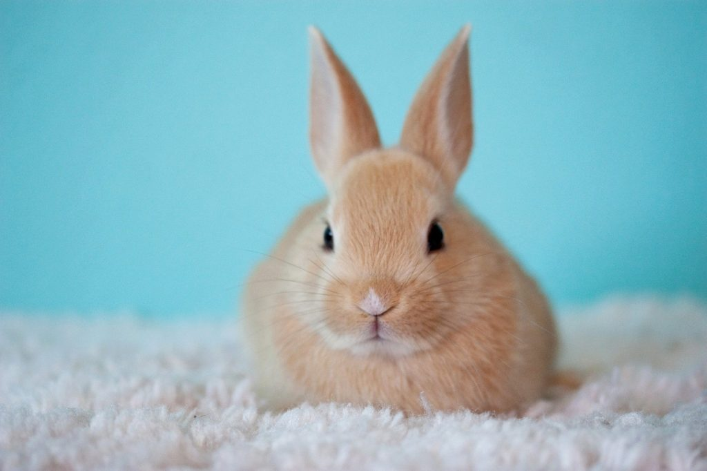 Riechen Kaninchen stark