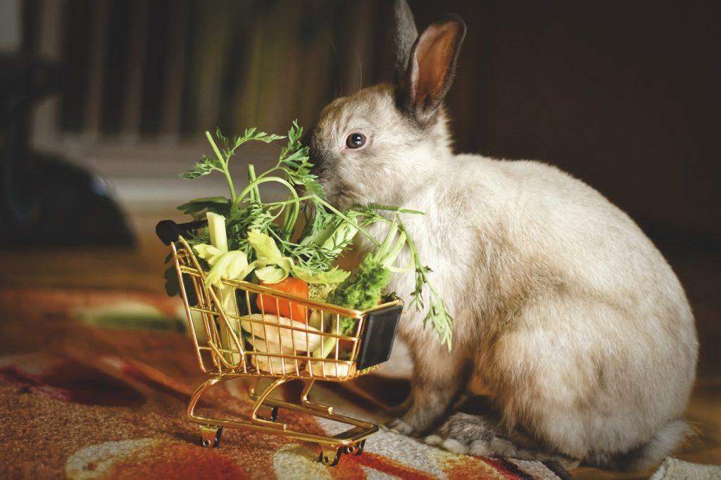 Kaninchen Alter je nach Ernährung