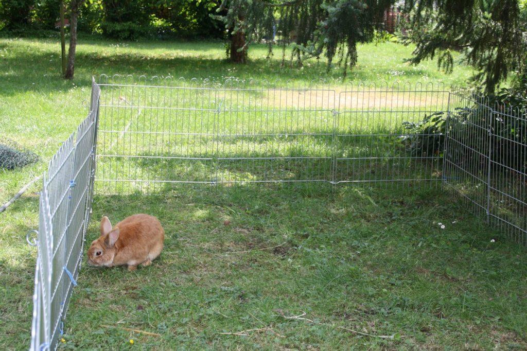 Großes Freigehege für das Kaninchen
