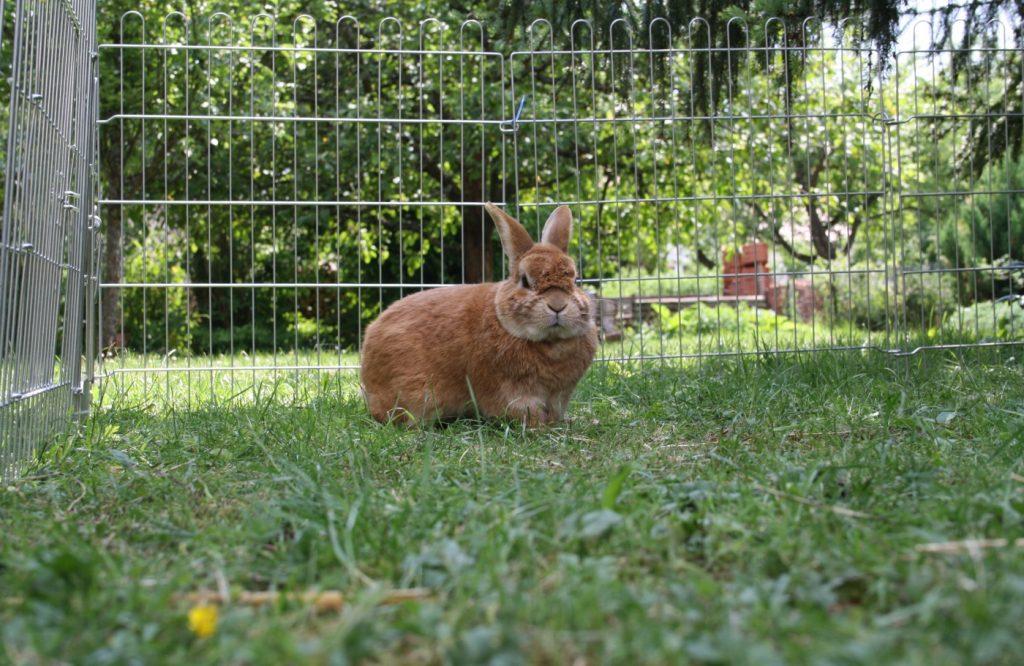 Hitzschlag beim Kaninchen