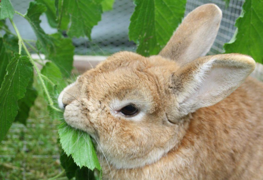Zahnprobleme beim Kaninchen
