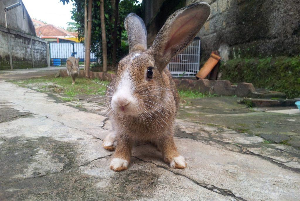 Kaninchen hat wunde Läufe