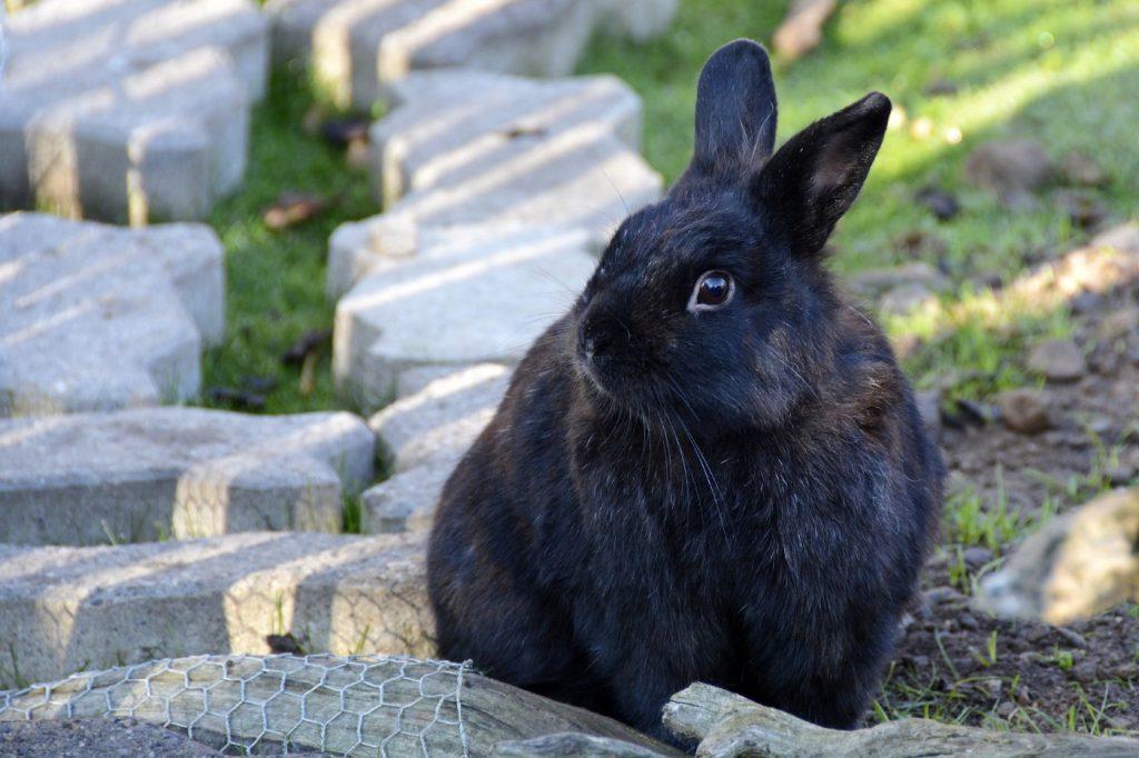 Clostridien beim Kaninchen behandeln und heilen