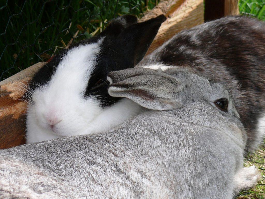 Erfolgreiche Eingewöhnung der Kaninchen