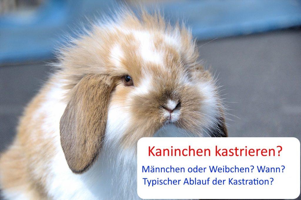 Kaninchen kastrieren - So wirds gemacht!
