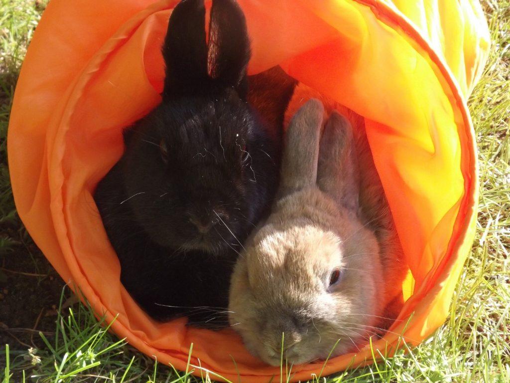 Kaninchen kaufen von privat