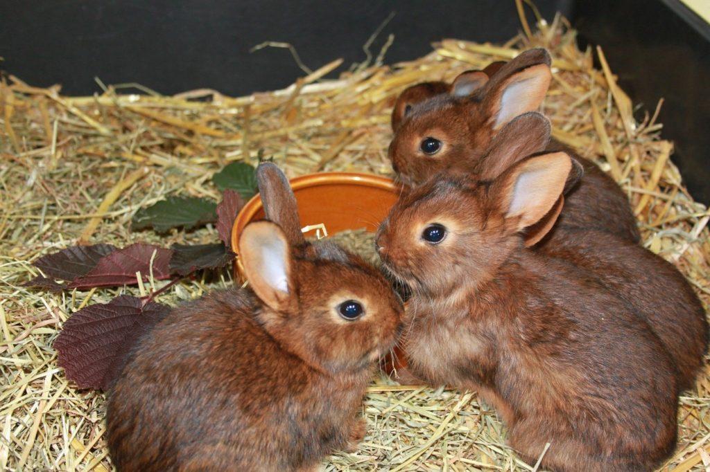 Im Zoofachhandel Kaninchen kaufen
