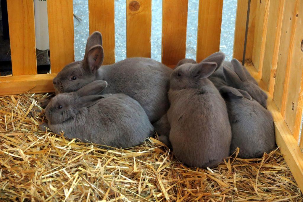 Kaninchen im Laden kaufen