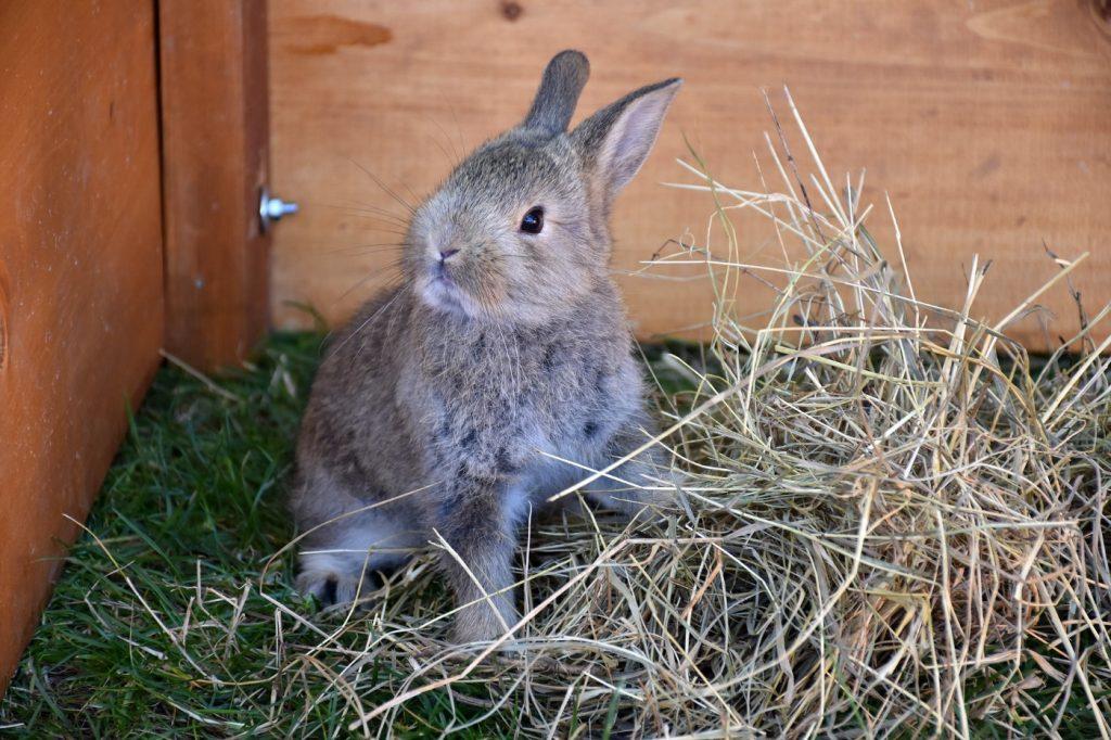 Kaninchen aus dem Tierheim