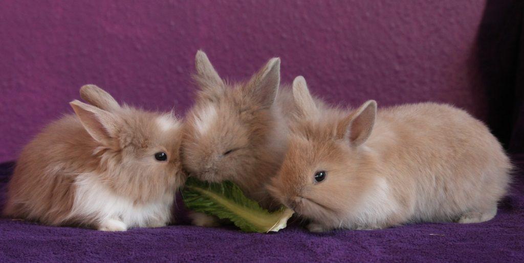 Kaninchenbabys abgeben
