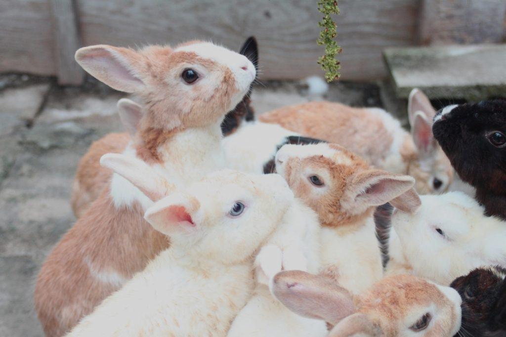 Kaninchenjungtiere abgeben