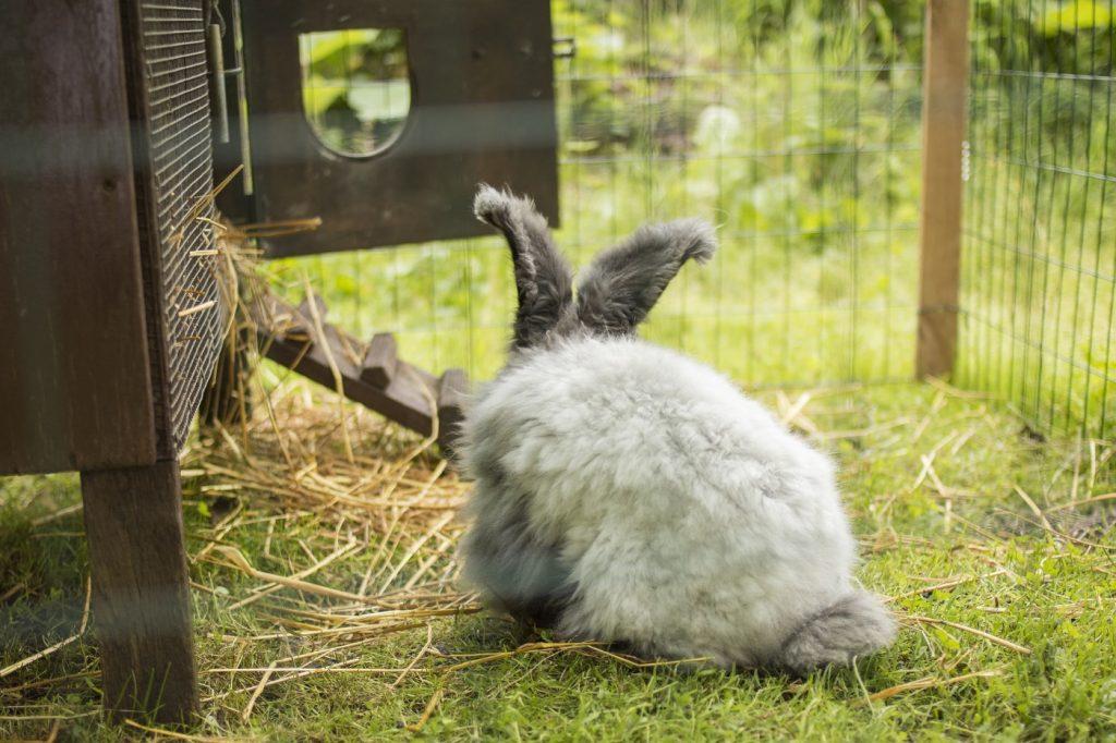 Sichere Umgebung für das Kaninchen