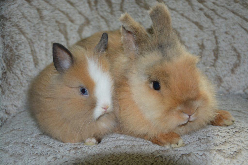 Vorüberlegungen Kaninchen